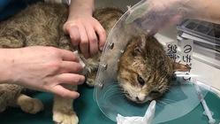 増え続ける保護猫達が1匹でも多く安住できる場所を作ってあげたい。