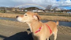 元・供血犬『シロちゃん』治療費支援