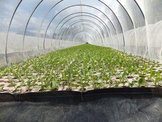 腎臓病の方が安心して食べられる低カリウム野菜を栽培したい。