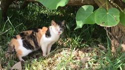 第7弾石垣島の捨てられた猫たちに治療を受けさせたい