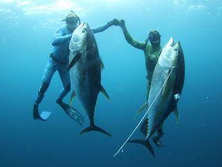 漁師として独立し、スピアフィッシング世界大会出場を目指したい