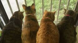 保護猫活動の資金援助