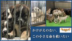 保護犬シェルターの隔離室を拡充し、1匹でも多くの小さな命を救いたい