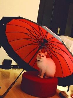奇形免疫不全の保護猫に幸せを
