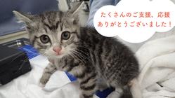 ちよだニャンとなる会|飼い主のいない猫たちの医療費にご支援を