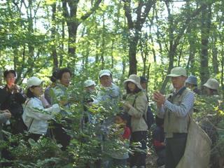 日本の森を守り、国産植物による高品質芳香商品の開発を行います