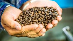 メイドインジャパンのコーヒーを!広島県呉市にコーヒー農園を作りたい