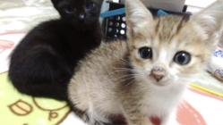 動物の助かる命を救う:佐賀県に24時間対応の動物救急病院を!