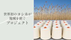 「世界初のヨシ糸が地域を紡ぐプロジェクト」が、淀川からスタート!