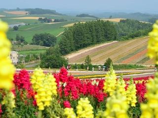 北海道を巡り、観光客へ北海道の隠れた魅力を発見し発信したい!