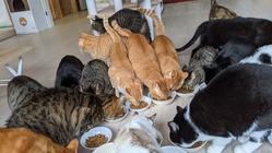 新型コロナに負けない!ハワイアン保護猫カフェオハナを維持したい!