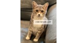 【FIP】猫伝染性腹膜炎の治療費、ご支援ご協力のお願い