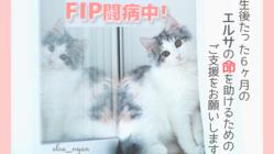 猫伝染性腹膜炎(FIP)と闘うエルサに✦耀く未来✦を届けたい☆ミ