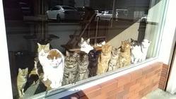 保護猫の老猫ホームを守りたい!