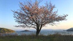 小豆島の未来を支える子供たちに、島が描かれた絵を残したい。