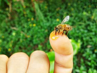 首里を花いっぱいに!ミツバチが運ぶ蜂蜜で新たな観光名物を!