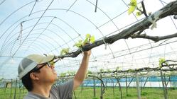 高知県でブドウ園を改修して、生食ブドウで自然派のワインを作りたい