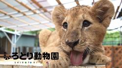 #自由すぎる動物園|動物との心の距離を0にするしろとり動物園の挑戦