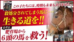 殺処分されてしまう引退馬に生きる道を。肥育場の馬たちを救い出したい