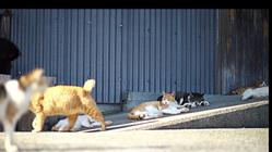 地域猫のTNR、保護活動を理解して頂く為の動画を作成したい!