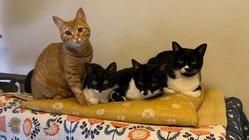 コロナに負けるな!保護猫カフェを存続させたい!