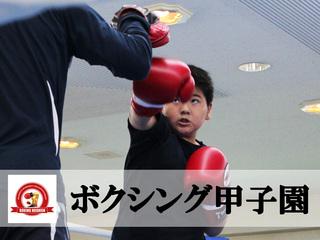 「ボクシング甲子園」というミット撃ち大会を全国に広めたい!