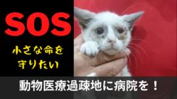 大量の野良猫犬が命を落とす動物医療過疎地に、不妊去勢専門病院を!