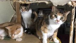 保護猫40匹の住処確保のために、どうか助けてほしいです!