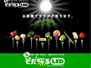 自宅にプチ農園を!!LED電球で安心の野菜を作りませんか?
