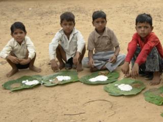 インドの農村部の栄養失調改善のためにモリンガを栽培したい!