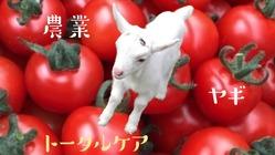 ヤギと農業が教えてくれること~障がい者の可能性とトータルケア