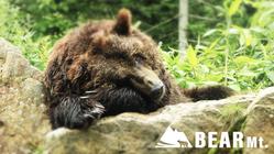 ベア・マウンテン|自然に近い環境でエゾヒグマを守り続けていくために