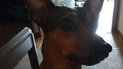 保護犬の小さな命の治療費にご支援 ご協力をお願い致します