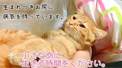 【鎖肛】生まれつきウンチが出しにくいシノちゃんを救いたい!