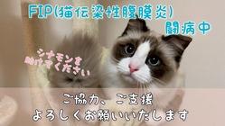 猫伝染性腹膜炎(FIP)治療のご支援、ご協力をお願いいたします。
