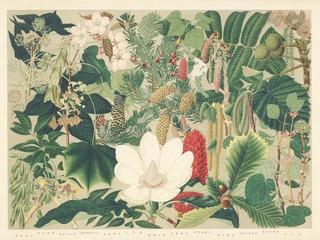 「北海道主要樹木図譜」展示会を東京で開催します
