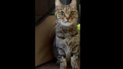 猫エイズ陽性ぽーちゃんを安らかにしてあげる為のご支援をお願いします