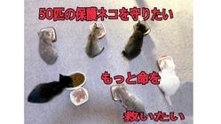猫の保護活動を継続する為に譲渡型保護猫カフェを作りたい!