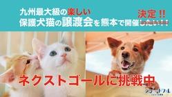 九州最大級の楽しい保護犬猫の譲渡会を熊本で開催したい!!