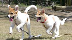 保護犬のためのドッグランを新設|新しい家族との出会いをここから。