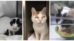 東京都猫多頭崩壊レスキューのご支援のお願い
