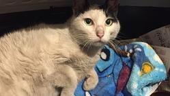 車にはねられた地域猫の治療費にお力をお貸しください!