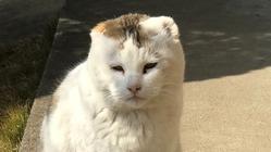 皮膚がんで耳を失った保護猫に検査で長生きしてほしい