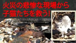 火事で行き場を失った野良猫たちを救いたい[第二弾]