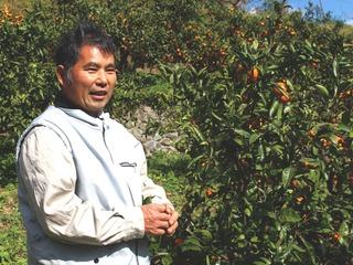 愛媛県で観光農園を開園するため、柑橘類の苗木オーナー募集!!