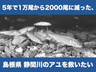 5年で生息数が1/5になった島根のアユが生きれる魚道を作ります!
