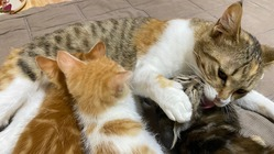 殺処分ゼロ!持続可能な保護猫活動のモデルケースを全国に広げたい!