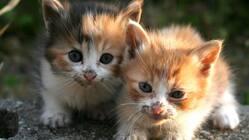 里親さんの元に行けない白血病の猫たちへ。安心して過ごせるおうちを。