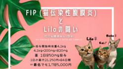 厄介な難病FIP (猫伝染性腹膜炎)と闘うリロちゃんへ希望の光を!