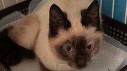 交通事故に遭って骨折した保護猫を救いたい